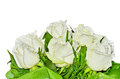 Bouquet of white roses on background Stock Image