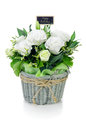 Bouquet of white roses isolate on background Royalty Free Stock Photo