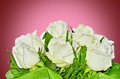 Bouquet of white roses on red background Royalty Free Stock Photos