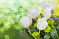 Bouquet of white tulips on blurred background Royalty Free Stock Photography
