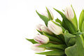 Bouquet of white and violet tulips Royalty Free Stock Photography