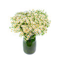Bouquet of wild daisies in a glass vase. Royalty Free Stock Photo