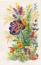 A bouquet of wildflowers watercolor beautiful Stock Images