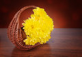 A bouquet of yellow chrysanthemums in a wicker basket still life flowers Royalty Free Stock Photography