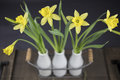 Bouquet Of Yellow Daffodils Royalty Free Stock Photo