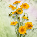 Bouquet of of yellow daisy-gerbera Royalty Free Stock Image