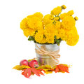 Bouquet of yellow mums in pot with autumn leaves isolated on white background Royalty Free Stock Photography