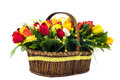Bouquet of yellow and red tulips with wild flowers in a wicker b Royalty Free Stock Photo