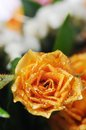 Bouquet of yellow roses narrow depth field Royalty Free Stock Photo