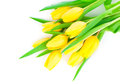 Bouquet of yellow tulip flowers isolated on white background Royalty Free Stock Photos