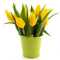 Bouquet yellow tulips Stock Photos