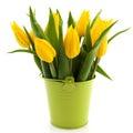 Bouquet yellow tulips Stock Photos