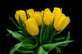 Bouquet of yellow tulips on a black background Royalty Free Stock Photo