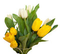 Bouquet of yellow and white tulip flowers isolated Royalty Free Stock Images