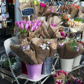 Bouquets Of Spring Flowers. Tu...