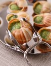 Bourgogne snails Royalty Free Stock Image