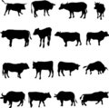 Bovine animals from around the world. Royalty Free Stock Photography