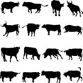 Bovine animals from around the world. Royalty Free Stock Image