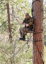 Bow hunter in a ladder style tree stand with at full draw demonstrating good safety by using a safety harness Stock Photography