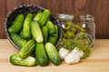 Bowl of fresh pickles garlic and dill Royalty Free Stock Photography