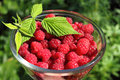 Bowl of fresh raspberry Royalty Free Stock Photography