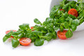 Bowl of green salad and tomatoes Royalty Free Stock Image