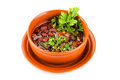 Bowl of mexican chili kidney bean soup with meat a Royalty Free Stock Image