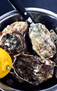 Bowl of oysters Royalty Free Stock Photo