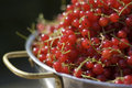 Bowl of redcurrants Royalty Free Stock Photos