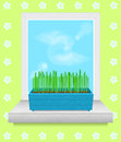 Box with grass stands on the windowsill spring time Stock Photos