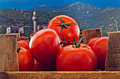 Box of red ripe tomatoes with old countryside background Royalty Free Stock Image