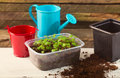 Box with seedling and agricultural tools Royalty Free Stock Photo