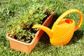 Box with seedling and watering can stand on the grass Royalty Free Stock Photo