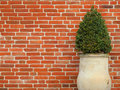 Box and wall Stock Photography