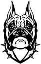 Boxer dog head black and white front view illustration Stock Photo