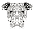 Boxer dog head zentangle stylized, vector, illustration, freehand pencil, hand drawn, pattern. Zen art. Ornate vector. Lace.