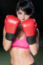 Boxer female portrait of a beautiful Royalty Free Stock Image