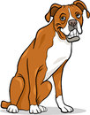 Boxer purebred dog cartoon illustration Stock Images