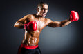 Boxer with red gloves Royalty Free Stock Photo