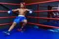 Boxer Resting