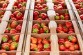 Boxes with ripe fresh strawberries close up Royalty Free Stock Photo