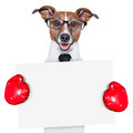 Boxing banner dor business dog behind a white Royalty Free Stock Image