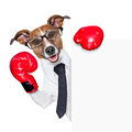 Boxing dog business behind white banner Royalty Free Stock Photo