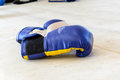 Boxing gloves on the boxing ring blue Stock Images