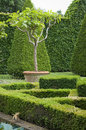 Boxwood garden design english norfolk england Stock Photo