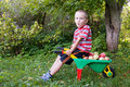 Boy with apples Stock Image