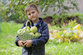 The boy with a basket of apples Stock Photos