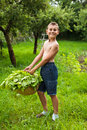 Boy with a basket of lettuce Royalty Free Stock Image