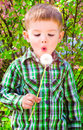 Boy blowing on a dandelion portrait of cute Stock Images