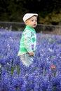 Boy in Bluebonnets Stock Photos